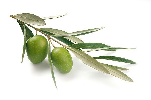 olive oil, greenwash