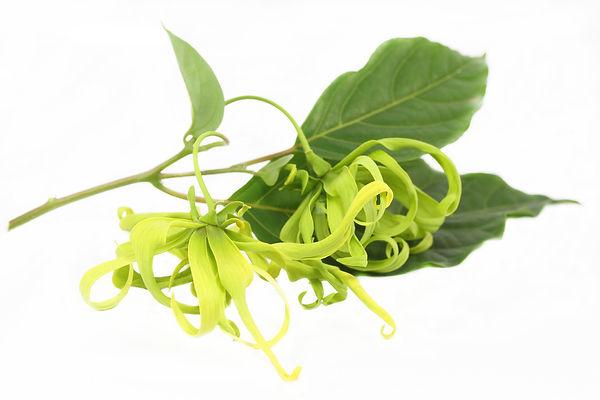 sunflower seed oil, greenwash