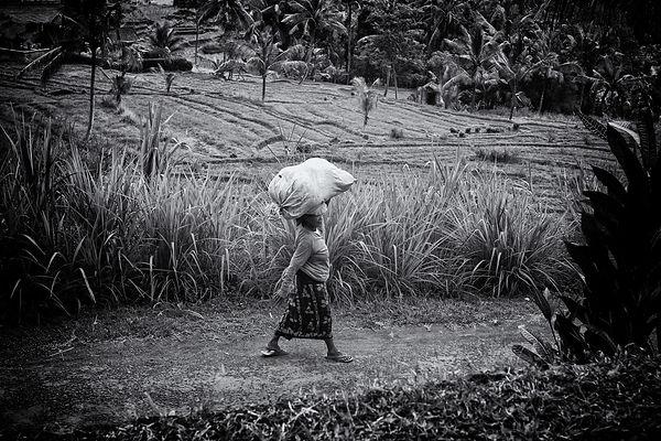 Asian farm plantation with a farmer