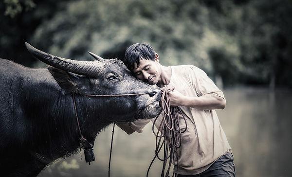 farmer with a bull