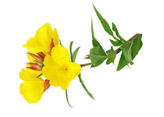 evening primrose oil, greenwash