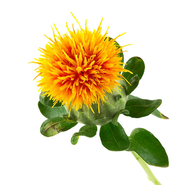 safflower oil, greenwash