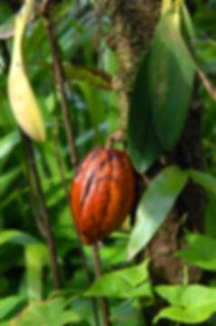 cocoa butter, greenwash