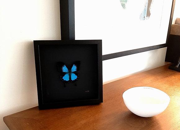 Cadre RÍO papillon bleu fond noir