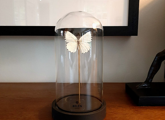Mini cloche allongée 1 papillon blanc