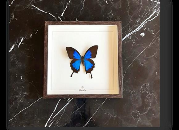 Cadre RÍO papillon bleu fond écru