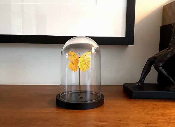 Mini cloche 1 papillon orange