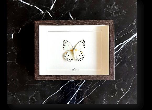 Cadre PUNO papillon blanc
