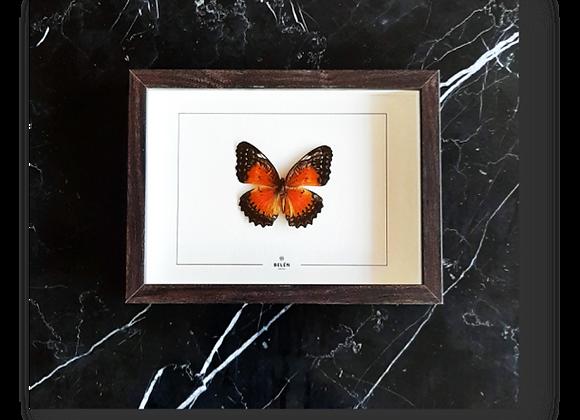 Cadre PUNO papillon orange
