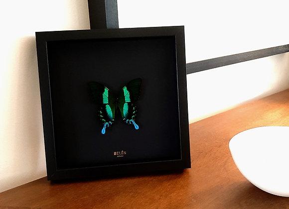 Cadre RÍO papillon vert fond noir