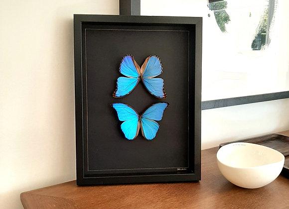 Cadre Morpho bleu