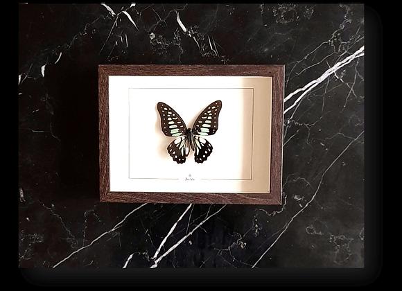 Cadre PUNO papillon bleu