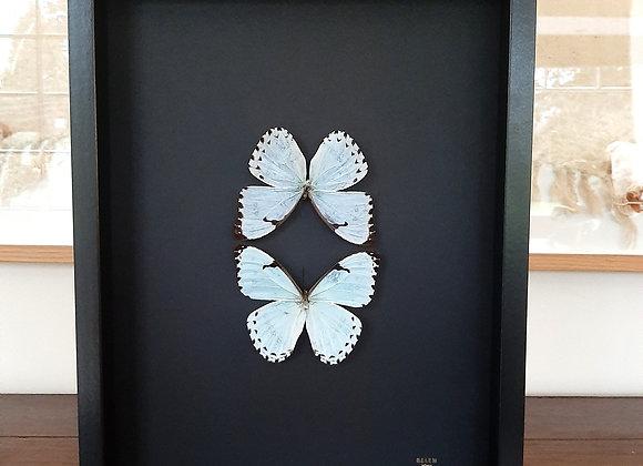 Cadre Morpho blanc