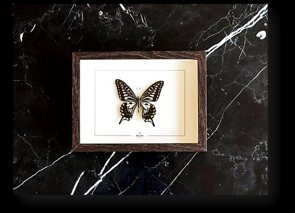 Cadre PUNO papillon noir et blanc
