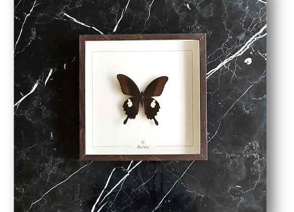 Cadre RÍO papillon noir fond écru