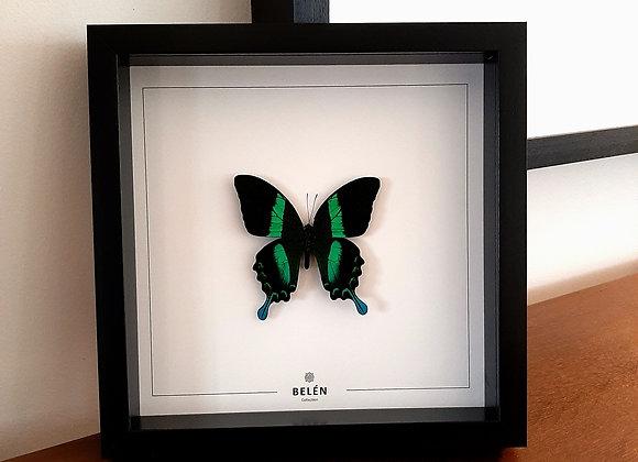 Cadre RÍO papillon vert fond écru
