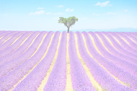 Lavender%20And%20Lonely%20Tree%20Uphill_