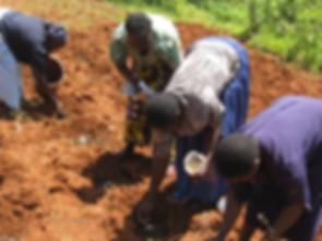 Kenya planting maize.png