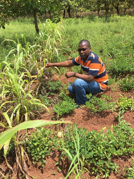 Field trials in Cote d'Ivoire