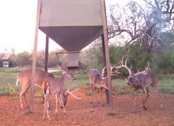 feeder bucks jj