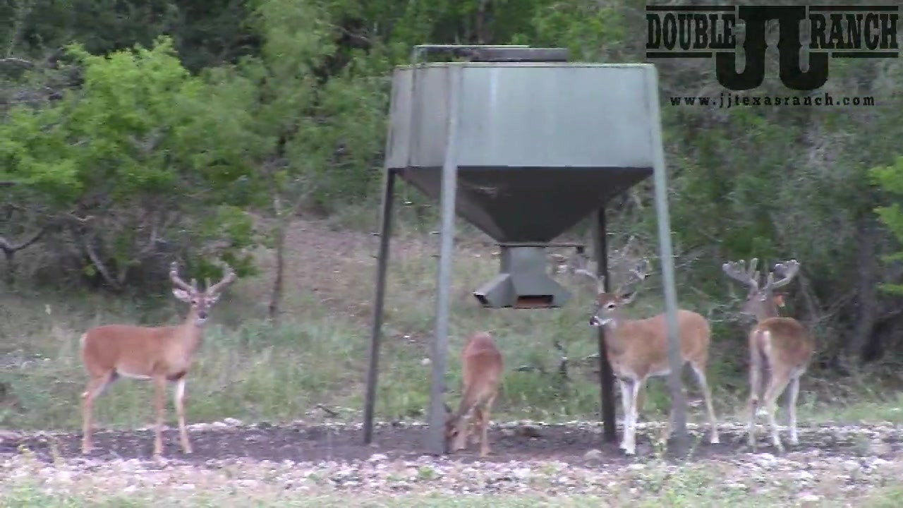 Growing Bucks at Double J Ranch