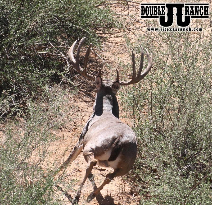 buck run 2