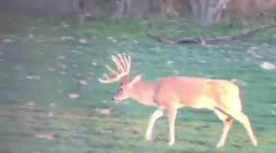 Watching Whitetails at the Double J Ranch