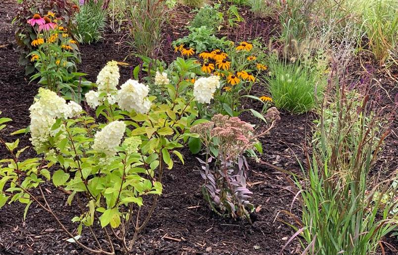 Plants In II.jpg