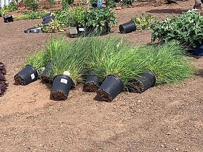 Montebello Unloading Plants 2.jpg