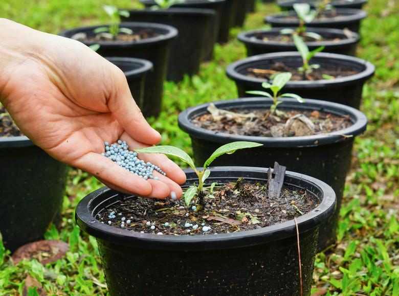 Os Nutrientes nas Plantas