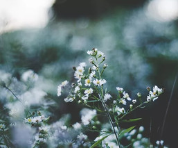 Flowers vs Herbs  |  Le Thanh Hai