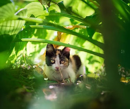 Cats See Us As Their Equals  |  Diogo Silva Santos