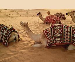 Dubai  |  Sophie Dyers