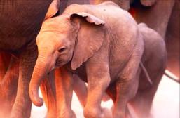Elephants Need Our Help!