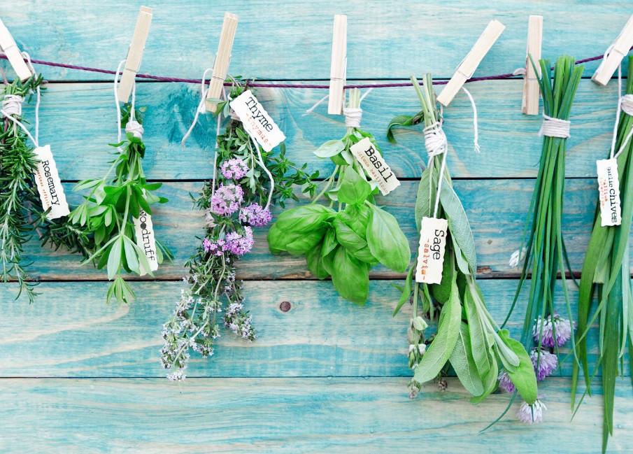 05-15.06.04 - pic - Flower vs Herbs.jpg