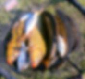 310319-b.jpg