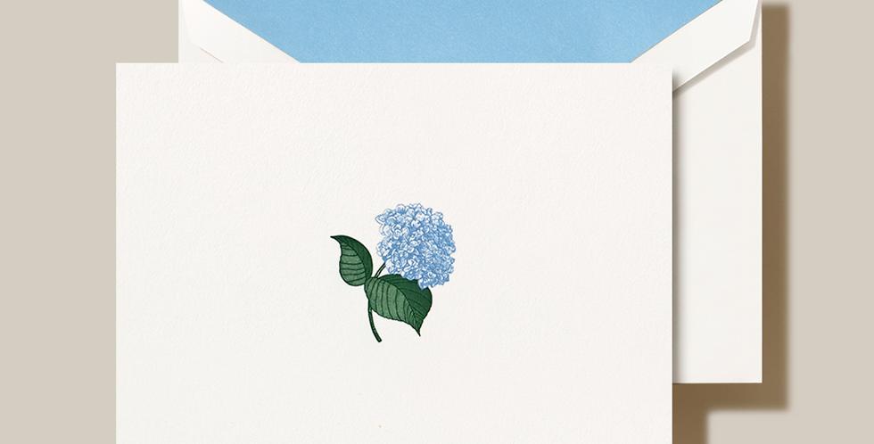 Blue Hydrangea Notes