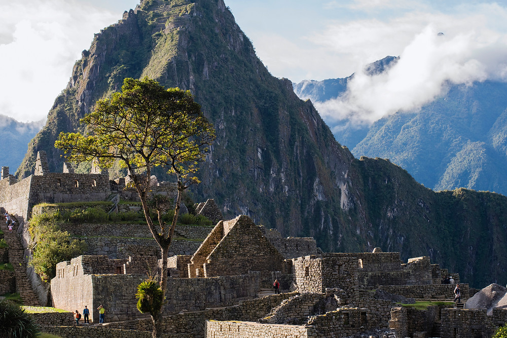 a unique tree in Machu Picchu