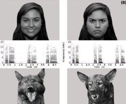 La preuve est faite : Nos chiens comprennent nos émotions