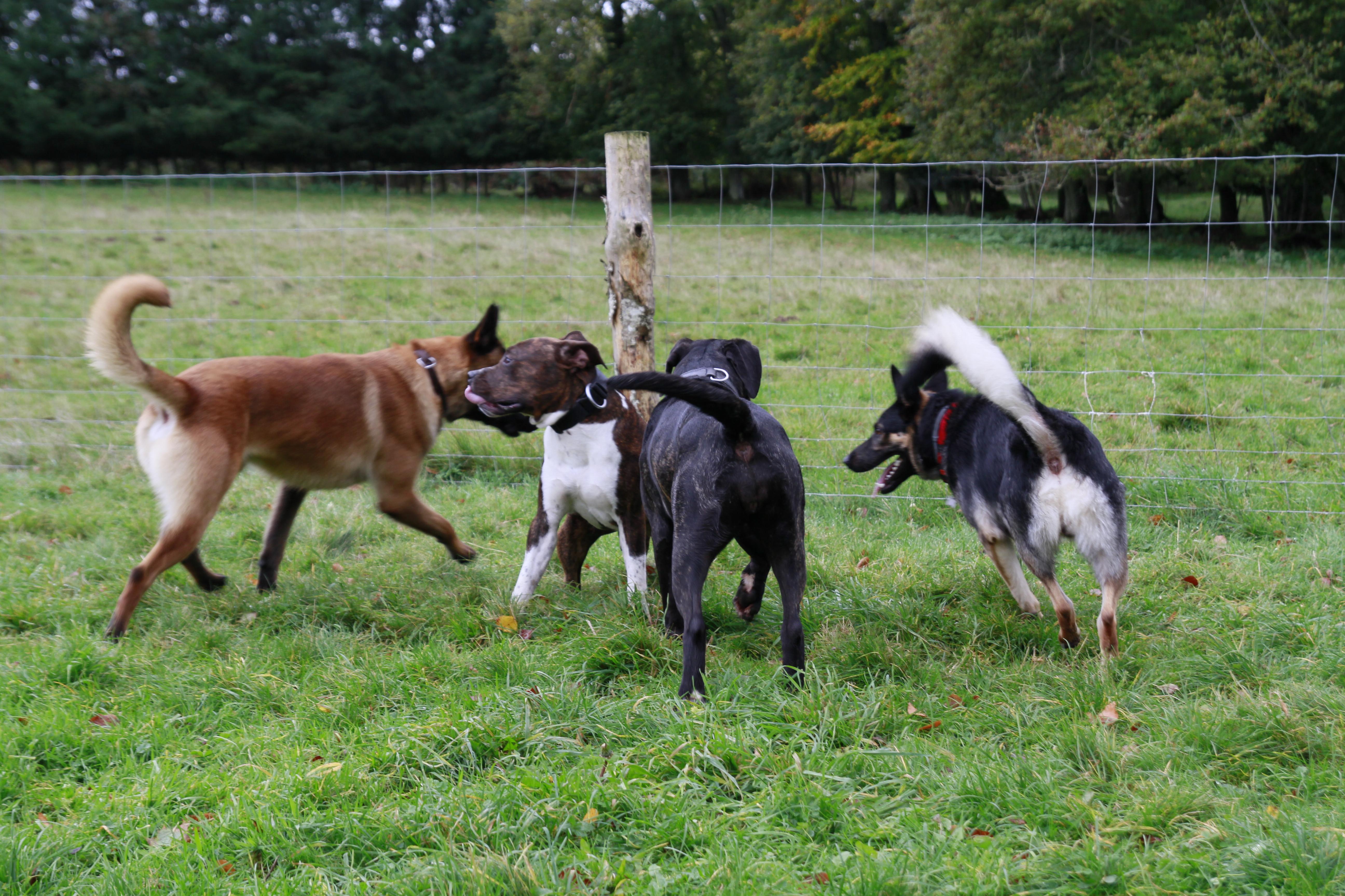 Bouquet de chiens
