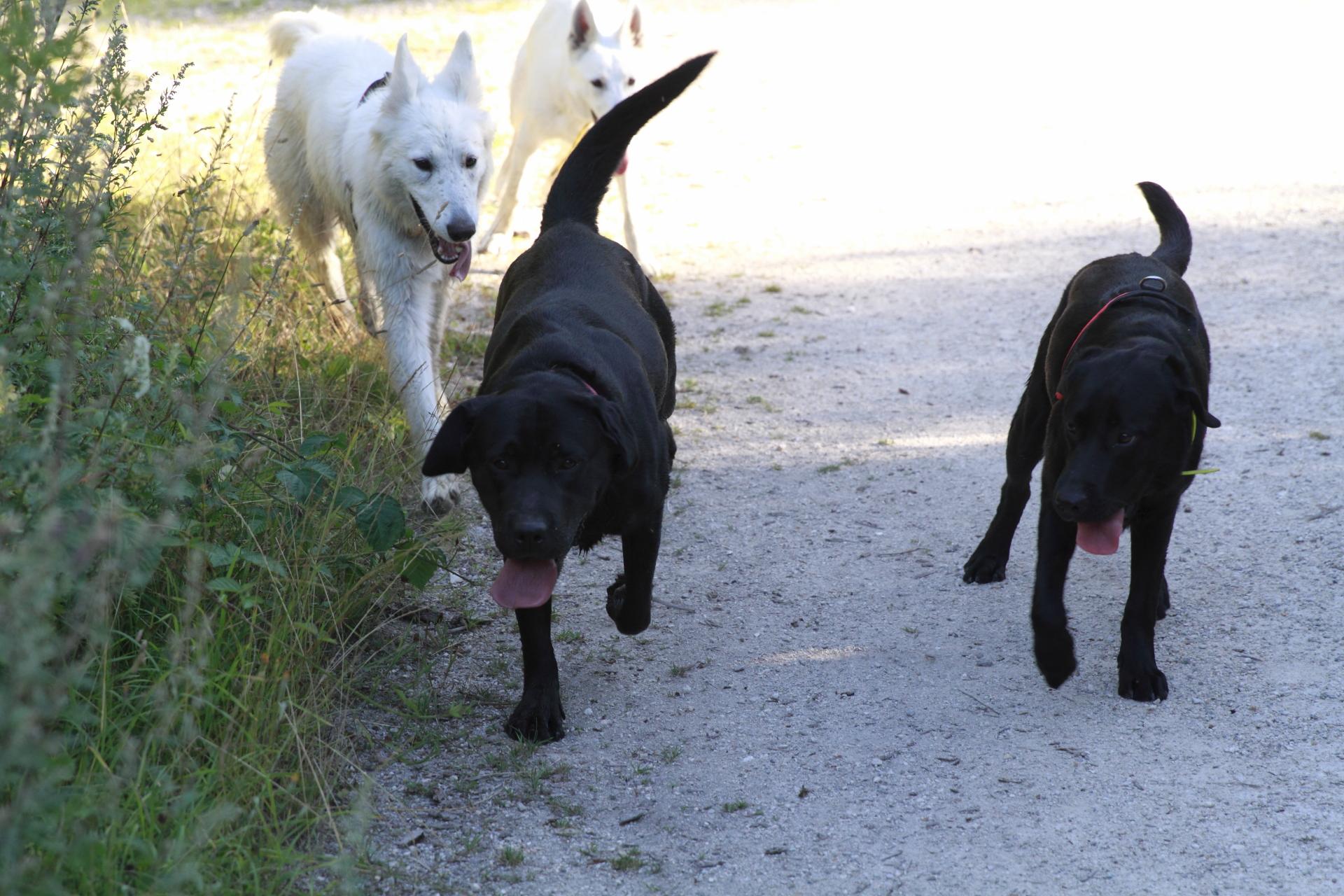 Bella, Judy, Lasso, Ripley