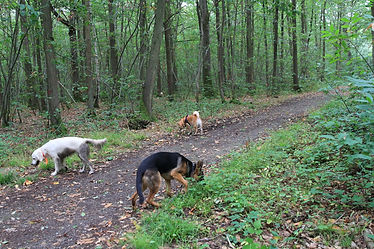 Coaching Canin, socialisation, Education canine, Le perray, Yvelines, Rambouillet, IDF, Paris