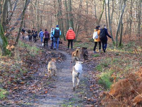 Promenade en groupe avec Balades Canines 78 et Edmée Roger Ostéopathe