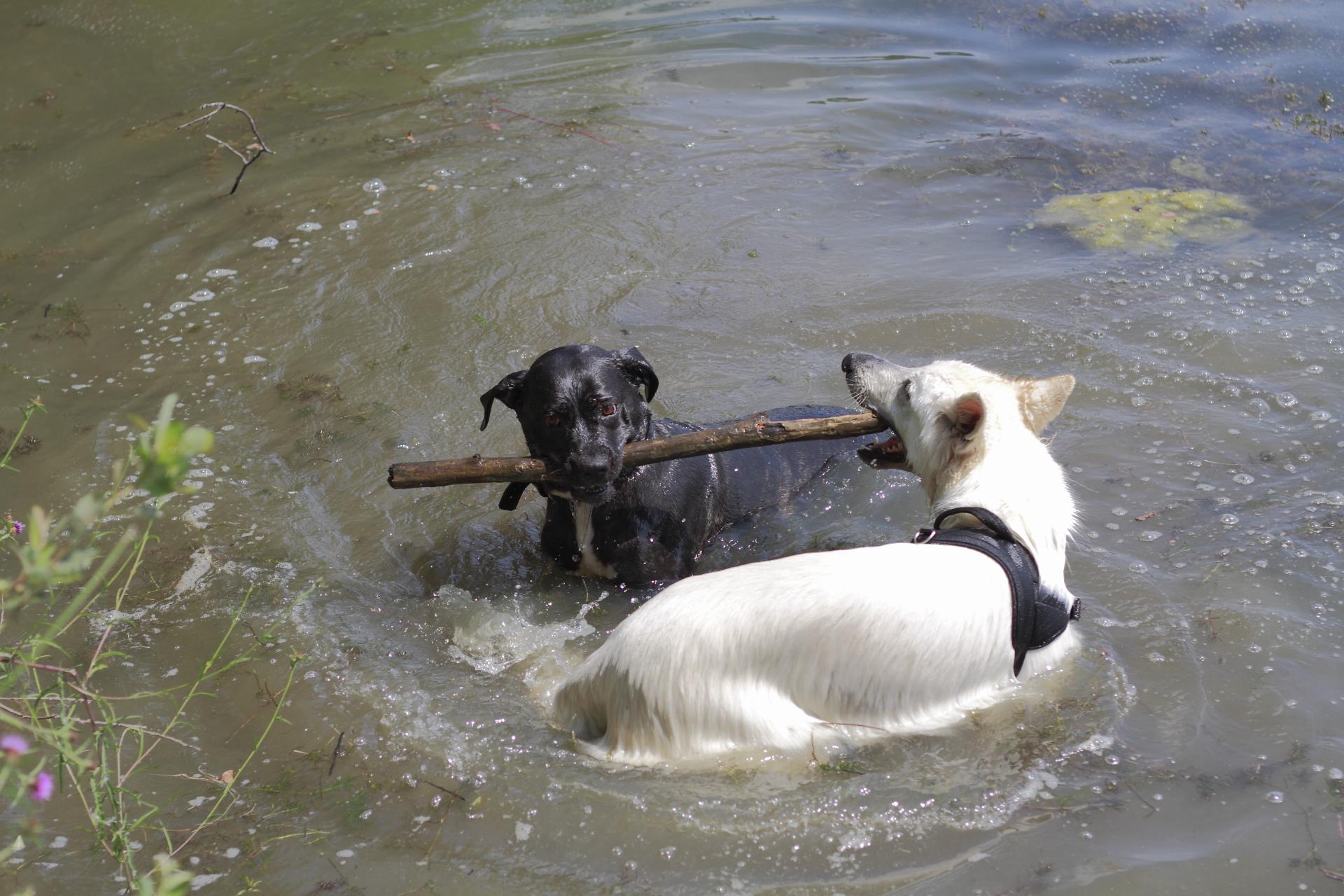 Dog-Ying-Yang
