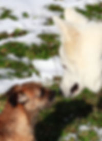Educateur canine Yveline, Le Perray en Yvelines