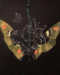 tin q nguyen art vanderbilt artist scientist nashville butterfly moth inset