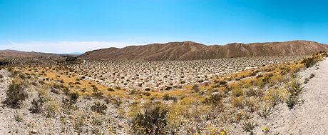 desert_pano.jpg