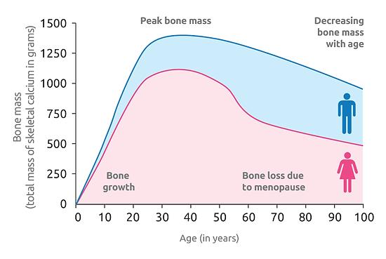 bone-health-img.png
