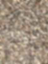 #78 Wicomico Buff Close up.JPG