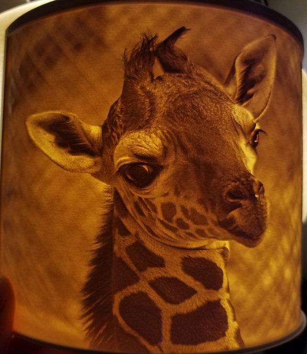 Original Photo of Giraffe